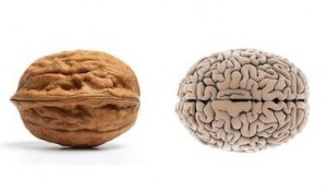 los acidos grasos esenciales contribuyen a la salud mental