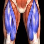 los cuadriceps musculos de la pierna